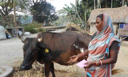 cattle-woman
